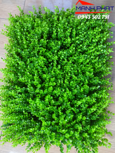 Tấm cỏ Tai Chuột – TC